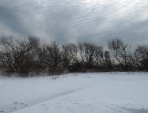 blizzard8